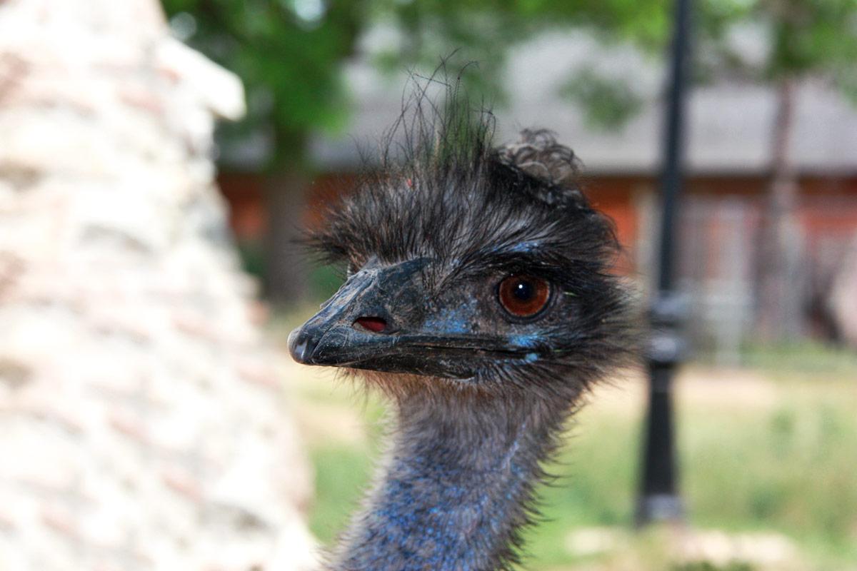 Club-Hípica-Julivert-avestruz