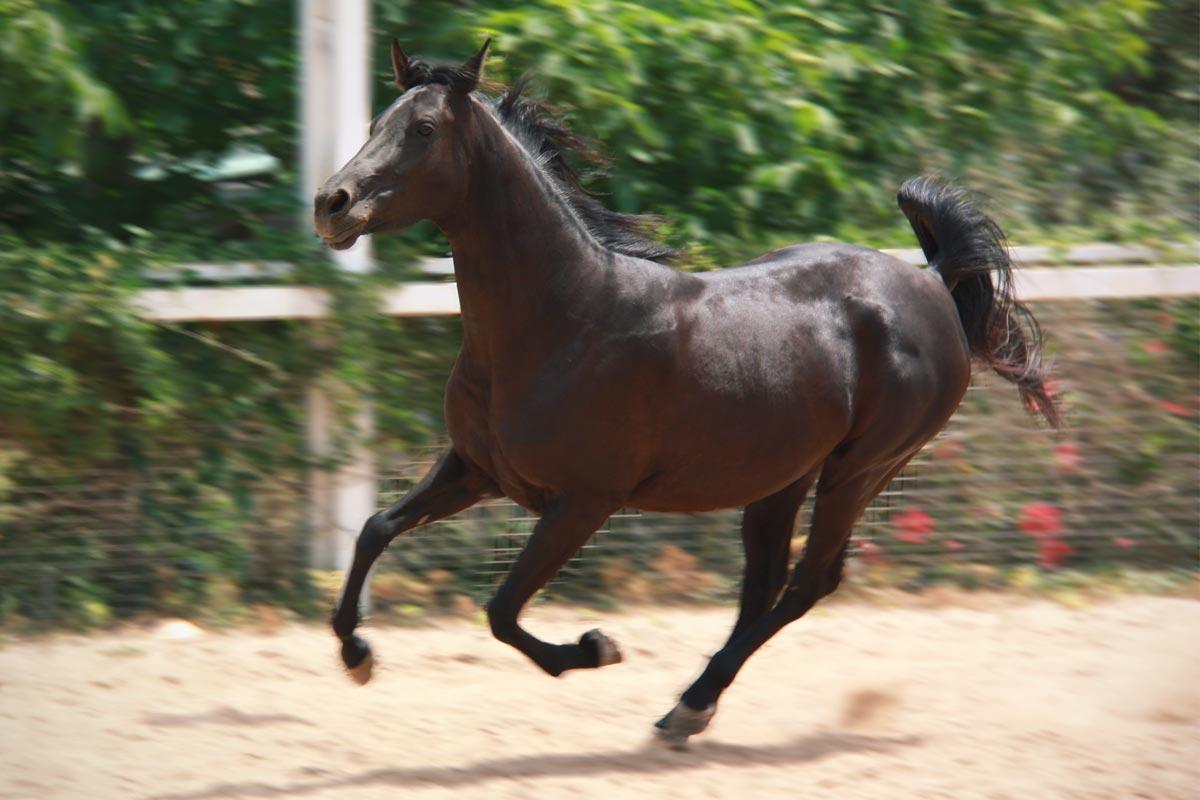 Hípica-Julivert-Riudoms-cavall-caballo